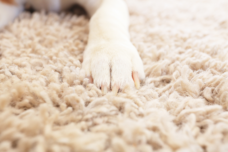 dreamstime_s_dog paw